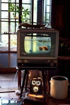 Repurposed TV fish tank