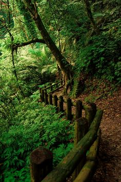 Outdoor Trails and Paths Forest Trail, Forest Path, All Nature, Amazing Nature, Beautiful Places, Beautiful Pictures, Walk In The Woods, Nature Pictures, Belle Photo