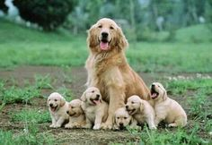 Proud mom with 6 little puppy's♥