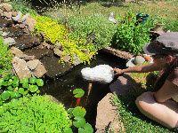 270 Gallon Preformed Pond Key Largo At Menards Duck World Pinterest Keys Key Largo And