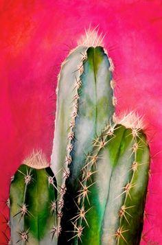 CACTUS+MEXICANO.jpg (1057×1600)