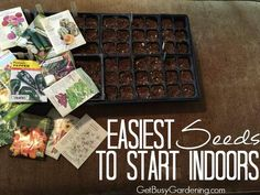 Save money by starting seeds indoors this spring. Here's some of the easiest seeds to start for beginner gardeners; both flowers and edibles.
