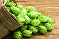 Beer Hops Humulus lupulus is a species of flowering plant in the Cannabaceae family, native to Europe, western Asia and North America. Beer Brewing, Home Brewing, Hop Rhizomes, Hops Extract, Hops Plant, Beer Hops, How To Make Beer, Natural Deodorant, Herbal Medicine