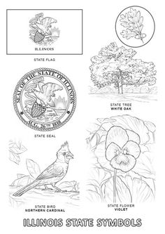 Illinois State Symbols coloring page from Illinois category. Select from 24104 printable crafts of cartoons, nature, animals, Bible and many more.
