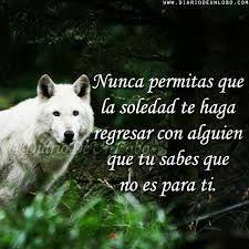 126 Mejores Imagenes De Lobos Wolf Pictures Wolves Y Wild Animals