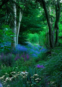 Wild flowers in the forest! my withy garden ; Beautiful World, Beautiful Gardens, Beautiful Places, Beautiful Forest, Beautiful Scenery, Simply Beautiful, Woodland Garden, Woodland Forest, All Nature
