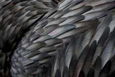 feather, grey, and grunge image