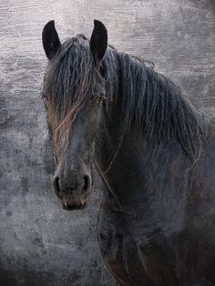 horse with no name by Joachim G.  Pinkawa