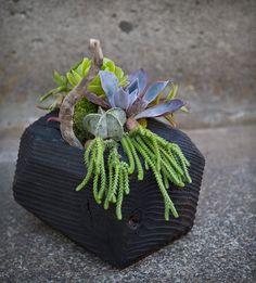 succulente vaso legno
