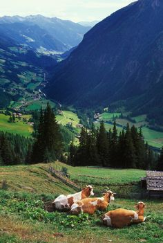 15 Photos That Perfectly Capture Austria's Stunning Countryside - Beautiful Pictures of Austria