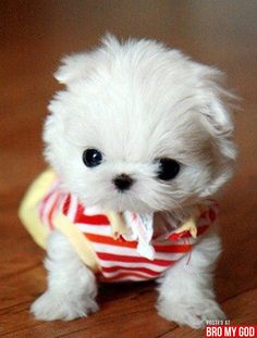 Is this a cute puppy or what? ZOMG, lots of cute puppies!