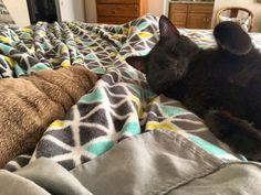 """Tuesday breakies wake up call…too early…can't smell food, yet.""💤 PugsleyLuigi  #pug #dog #cat #kitty #siblings #early #morning #wakeup #sleeping #sleepy #sleep #foodie #breakfast"