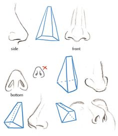 Human Anatomy Fundamentals: Basics of The Face - Tuts+ Design & Illustration Tutorial