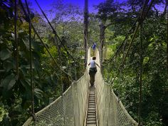 Canopy Walkway In The Amazon Rainforest (110 feet Up) | Flickr - 相片分享!