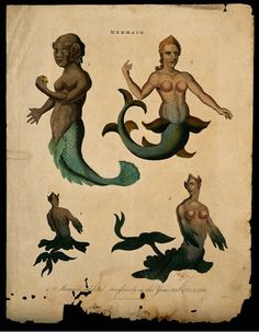 Three mermaids, one of them showing posterior and front view. Coloured engraving, 1817.  Wellcome Library, London