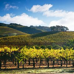 Guide to visiting wine country in the fall