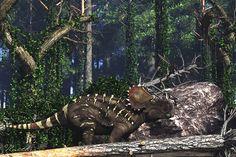 Sinoceratops-by-paleoguy.jpg (1500×1000)