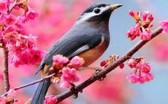 Bird on blooming branch