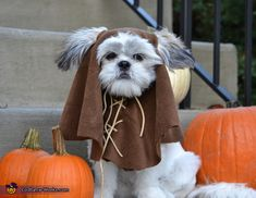 Easy ewok no sew dog costume tutorial pinterest ewok costume ewok halloween costume contest at costume works solutioingenieria Image collections