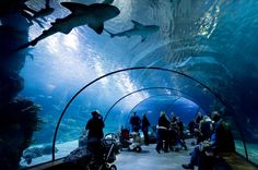 The Oceanium aquarium, which opened in 2001, is one of Rotterdam's favourite family gathering spots in the Netherlands.