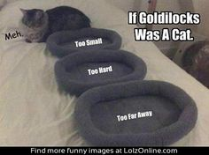 If Goldilocks was a cat