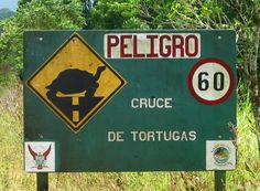 Tortoise crossing in the Galapagos