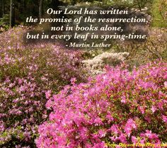 Our Lord has written the promise of the resurrection, not in books alone, but in every leaf in spring-time. - Martin Luther