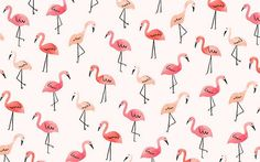 The cutest flamingo desktop wallpaper by Jen B. Peters for LaurenConrad.com