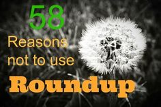 58 Reasons not to use Roundup (with links to studies and reports)