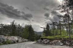 forest norway - Google Search
