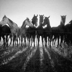 Myndaniðurstöður Google fyrir http://adamjahielphotography.com/images/lastcowboy/Horse_Shadows_swoz_bgp.jpg