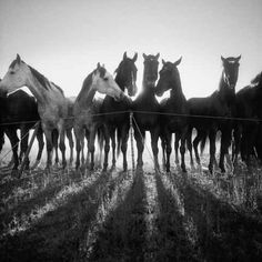 The 'remuda' on Spanish Ranch, Nevada (working horses used by the cowboys) - Title: 'Remuda, Spanish Ranch' - Last Cowboy Art Photography of Adam Jahiel