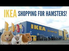 IKEA maybe just a regular furniture store BUT if you use a little bit of creativity many of the products can work perfectly for hamsters! Game Expo, Hamster Care, Rabbit Gif, Ikea Shopping, Pocket Pet, Social Media Stars, Pet Care, Hamsters, Puppies