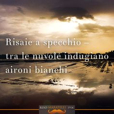 Haiku e riso. Autore Oscar Luparia. #haiku e #riso