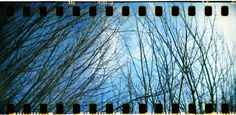 Winter Trees (c) Lomoherz.de, lomo