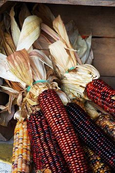 """It wouldn't be autumn without """"Indian Corn""""."""