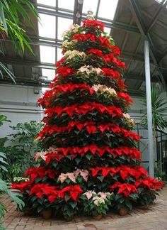 Dow Gardens Christmas - Midland, MI