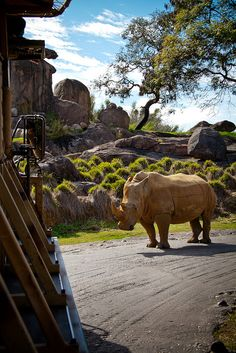 Disney's Animal Kingdom's Wilderness tour has been something I have always wanted to do, and would be a part of dream vacation trip.