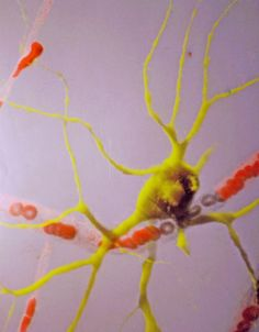 Microscopic images of the nervous system
