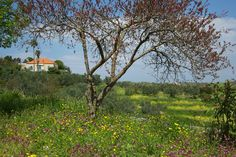 Spring in the North of Lebanon with a traditional red-roofed Lebanese house in the background.