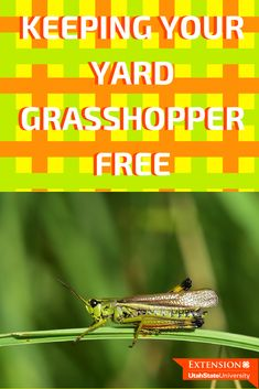 Grasshoppers Getting in Your Garden? Three Tips for Control Pest Management, Grasshoppers, Lawn Care, How To Get Rid, Pest Control, Garden Ideas, Plant, Yard, Gardening