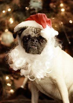 Santa Pug- what a cutie!