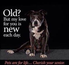 I want to adopt all of the old dogs and cats! Beagle, Pit Bulls, I Love Dogs, Puppy Love, Game Mode, Animals And Pets, Cute Animals, Funny Animals, She Wolf