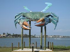 Rockport, Texas. Yes Maryland when your blue crab harvest is bad we ship 'em to you. I know, it's all about the Old Bay.