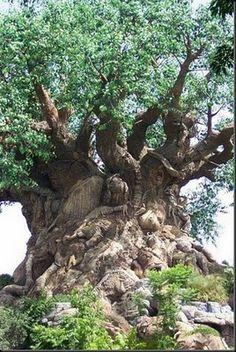 I love this tree    #gnarly tree