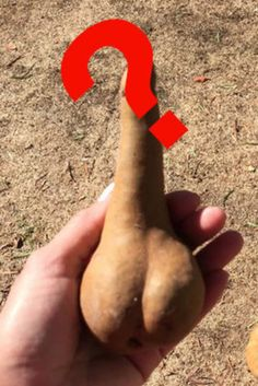 This Fruit Is So Obscene We Can't Show It To You (Unless You Click)