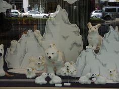 Steiff polar bears in a Berlin window