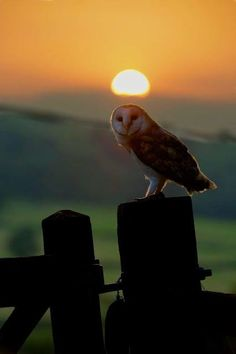 """""""Le Soleil se couche ! C'est l'heure d'entrer en action ....."""""""