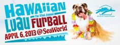 SPCA of Central Florida Hawaiian Luau Furball is April 6 at SeaWorld.  http://www.orlandocanineconnections.com/spca-furball/