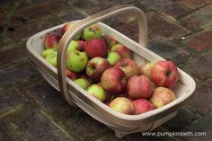 Collecting apples using my beautiful trug made by Kevin Skinner from Trug Makers in East Sussex. The trug I have and you see pictured here is No. 7.